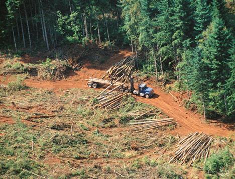 Deforestación, la tala de árboles